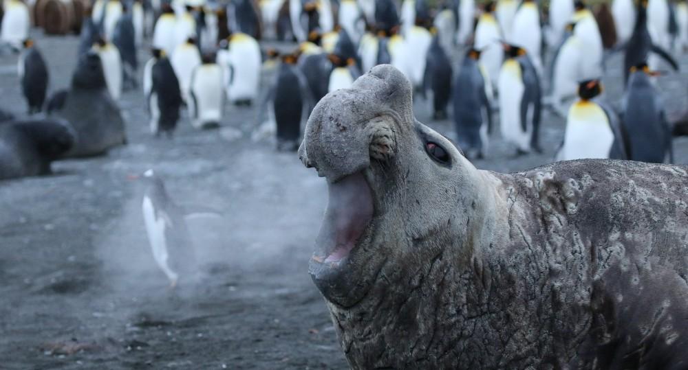 Image: Jackie-Downey 'Walrus Breath'